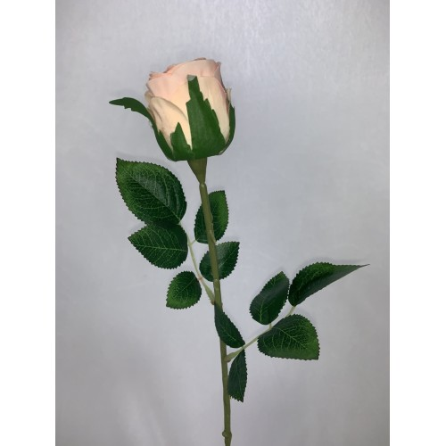 Róża pojedyncza kolor 2